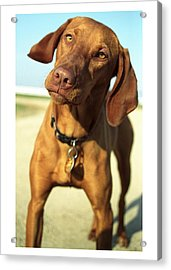 Acrylic Print featuring the photograph Cooksie by Jim  Arnold