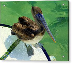 Cool Footed Pelican Acrylic Print by Karen Wiles