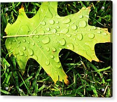Cool Morning Dew Acrylic Print
