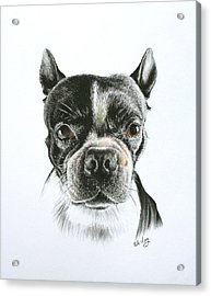 Cooper Acrylic Print by Mike Ivey