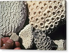 Coral Cobbles On Beach Of Bonaire Acrylic Print by Greg Dimijian