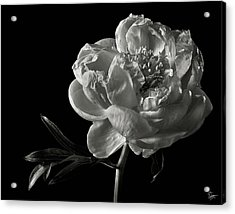 Acrylic Print featuring the photograph Coral Peony In Black And White by Endre Balogh