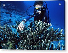 Coral Research Acrylic Print by Alexis Rosenfeld
