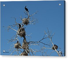 Acrylic Print featuring the photograph Cormorant Condos by Stephen  Johnson