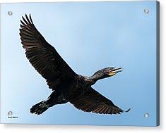 Cormorant Flying Over Duck Lake Acrylic Print
