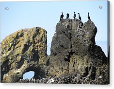 Cormorants At Indian Point Acrylic Print