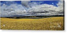 Corn Field Panorama Acrylic Print by Heiko Koehrer-Wagner