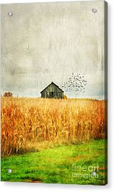 Corn Fields Of Kentucky Acrylic Print by Darren Fisher