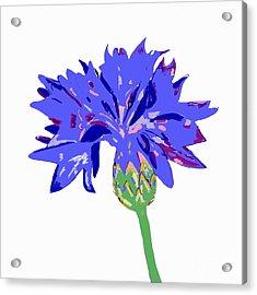 Acrylic Print featuring the digital art Cornflower by Barbara Moignard