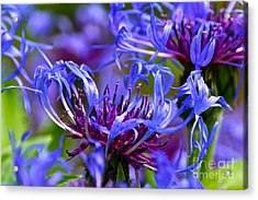 Cornflower Color Acrylic Print by Byron Varvarigos