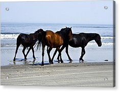 Corolla Beach Horses Acrylic Print