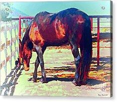Corraled Horse Acrylic Print