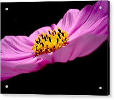 Cosmia Flower Acrylic Print by Sumit Mehndiratta