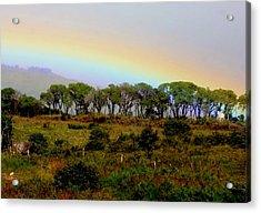 Acrylic Print featuring the photograph Costa Rica Rainbow by Myrna Bradshaw