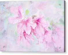Cotton Candy Acrylic Print by Brenda Bryant