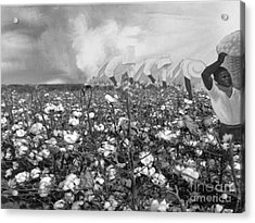 Cotton Field Acrylic Print by Belinda Threeths