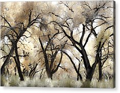 Cottonwood Trees Acrylic Print by Denice Breaux