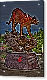 Cougar Pride Acrylic Print