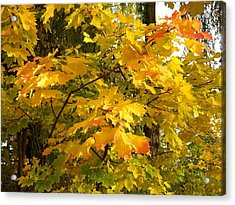 Country Color 10 Acrylic Print by Will Borden