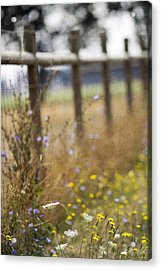 Country Fence Acrylic Print by Rebecca Cozart