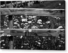 Country Flowers In Black And White Acrylic Print