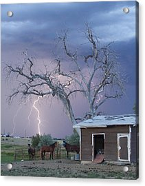 Country Horses Lightning Storm Ne Boulder County Co 66v Acrylic Print by James BO  Insogna