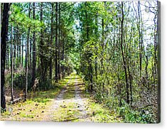 Acrylic Print featuring the photograph Country Path by Shannon Harrington