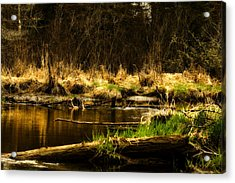 Country River Acrylic Print by Gary Smith
