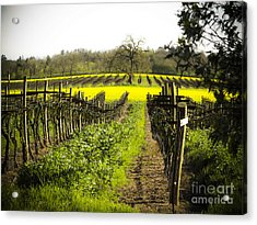 Acrylic Print featuring the photograph Country Roads by Leslie Hunziker