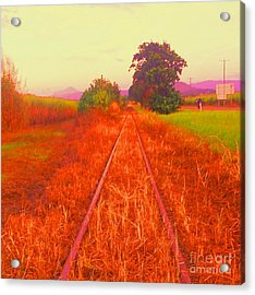 Country Tracks Acrylic Print by David Peters