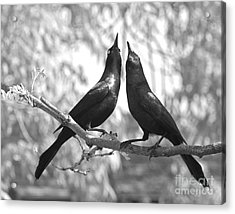Acrylic Print featuring the photograph Courtship by Jan Piller