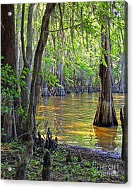 Cove At Caddo Lake Acrylic Print by Gayle Johnson