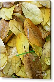 Covering The Green Acrylic Print by Trish Hale