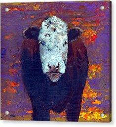 Cow Acrylic Print by Eric Atkisson