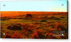 Cow Grazing In The Hills Acrylic Print by Wingsdomain Art and Photography