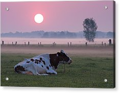 Acrylic Print featuring the photograph Cow In Meadow by Hans Engbers