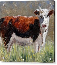 Cow In The Meadow Acrylic Print