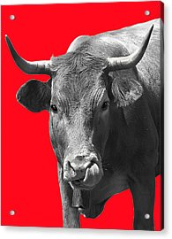 Acrylic Print featuring the photograph Cow On Red by Jacqi Elmslie