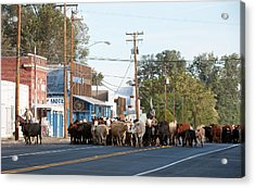 Acrylic Print featuring the photograph Cow Town by Gary Rose