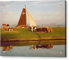 Cows And Sails Acrylic Print