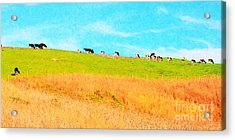 Cows On A Hill . 40d3430 . Painterly . Long Cut Acrylic Print by Wingsdomain Art and Photography