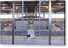 Cowshed Interior Acrylic Print by Jaak Nilson
