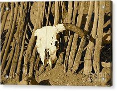 Cowskull - Sepia Acrylic Print by Pamela Walrath