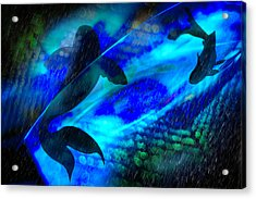 Acrylic Print featuring the photograph Coy Koi by Richard Piper