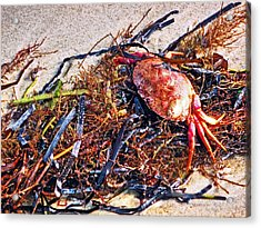 Acrylic Print featuring the photograph Crab Boil by William Fields