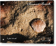 Acrylic Print featuring the photograph Crab Shell 'sconset Beach Nantucket by Jack Torcello