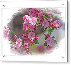 Crabapple Plethora Acrylic Print
