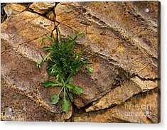 Crack  In The Wall Acrylic Print