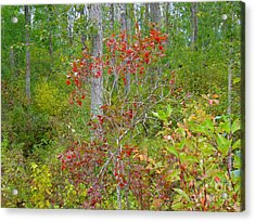 Acrylic Print featuring the photograph Cranberries With Early Autumn Colors by Jim Sauchyn
