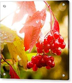 Cranberry Bliss Acrylic Print by Matt Dobson